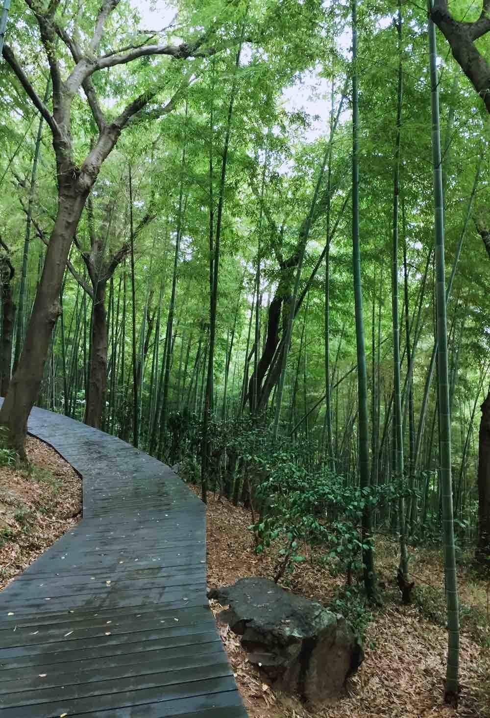 漫步佘山的竹林中 秋风萧瑟 竹叶瑟瑟作响 曲径通幽处 别有一番风味